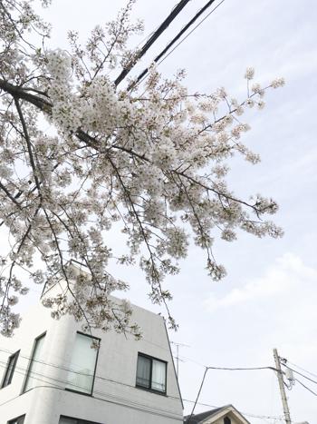f:id:sakuramiyuki:20210330211357j:plain
