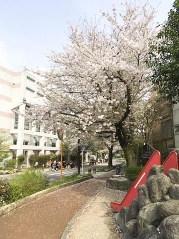 f:id:sakuramiyuki:20210330211653j:plain