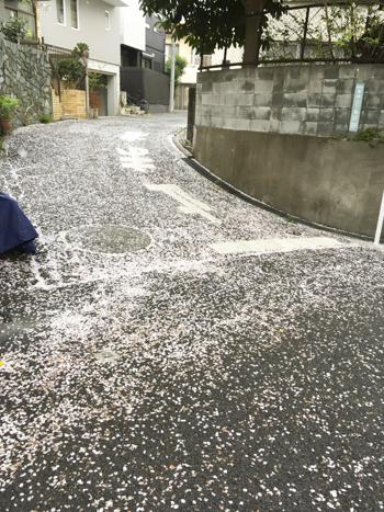f:id:sakuramiyuki:20210330212049j:plain