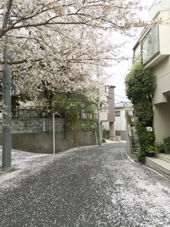 f:id:sakuramiyuki:20210330212132j:plain