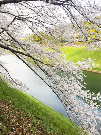 f:id:sakuramiyuki:20210330213051j:plain