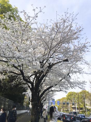 f:id:sakuramiyuki:20210330213217j:plain