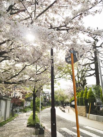 f:id:sakuramiyuki:20210330213846j:plain