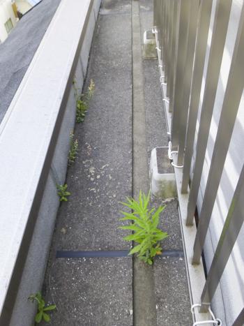 f:id:sakuramiyuki:20210608225011j:plain