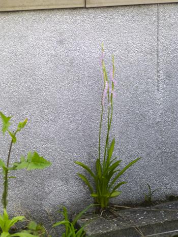f:id:sakuramiyuki:20210608225633j:plain