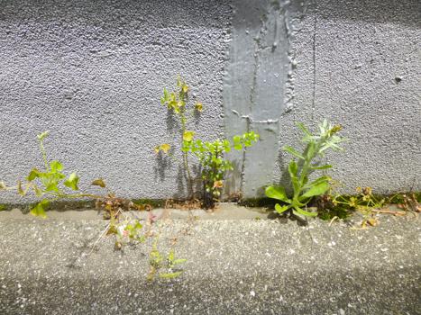 f:id:sakuramiyuki:20210608230842j:plain