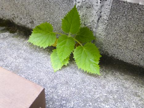 f:id:sakuramiyuki:20210608231304j:plain