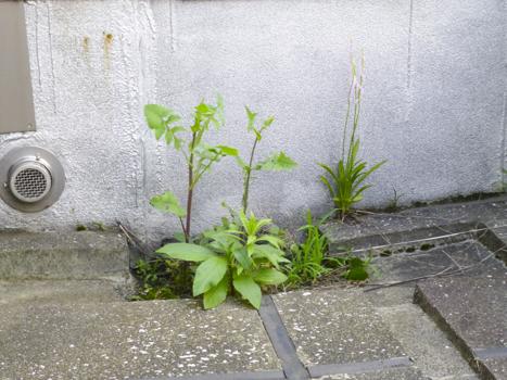 f:id:sakuramiyuki:20210609000424j:plain