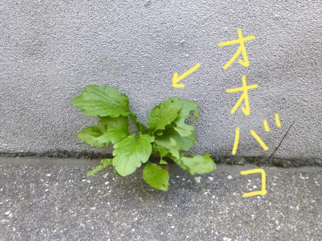 f:id:sakuramiyuki:20210611205230j:plain