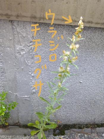 f:id:sakuramiyuki:20210611205311j:plain