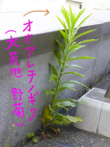 f:id:sakuramiyuki:20210617173359j:plain