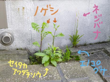 f:id:sakuramiyuki:20210617174305j:plain