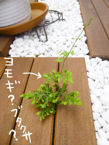 f:id:sakuramiyuki:20210617175813j:plain