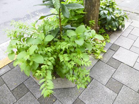 f:id:sakuramiyuki:20210617180217j:plain
