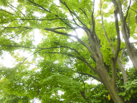 f:id:sakuramiyuki:20210806131437j:plain