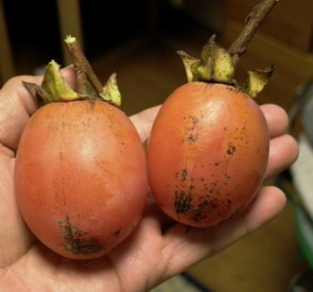 山中の熟柿の画像