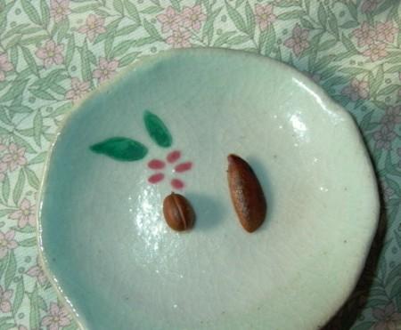 老爺柿の種の画像