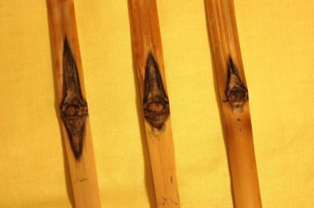 茶杓三本 荒削りの画像