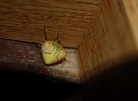 初めて見る蜘蛛の画像