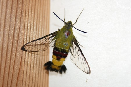 10:23 amこれ蜂ですかね gayaさ~んの画像