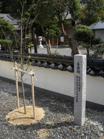当家菩提寺 開山五百五十年をむかえた 万年山 松岳寺の画像