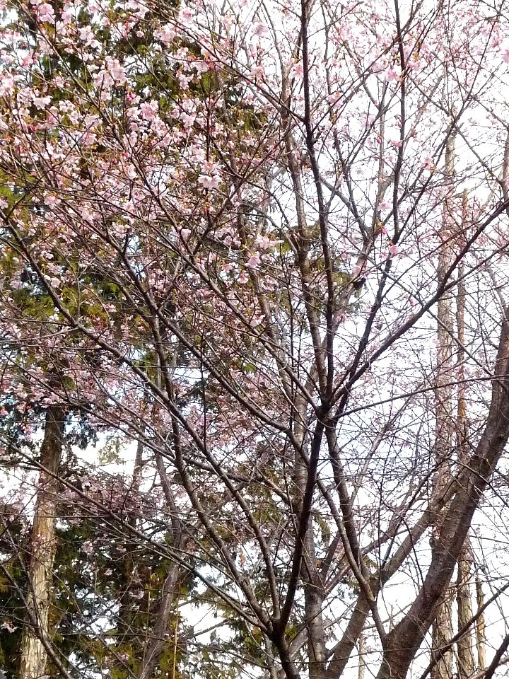 f:id:sakuramori:20170322150812j:plain