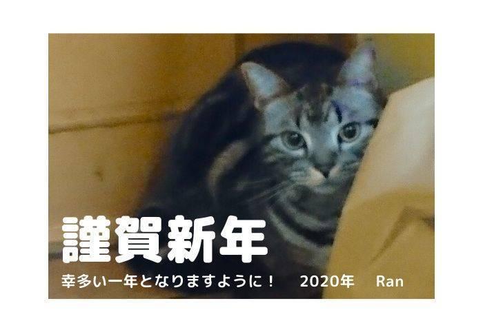 f:id:sakuran_blog:20200102215351j:plain