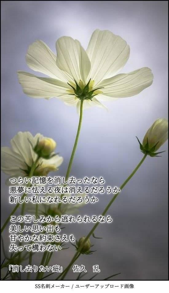 f:id:sakuran_blog:20200107081639j:plain