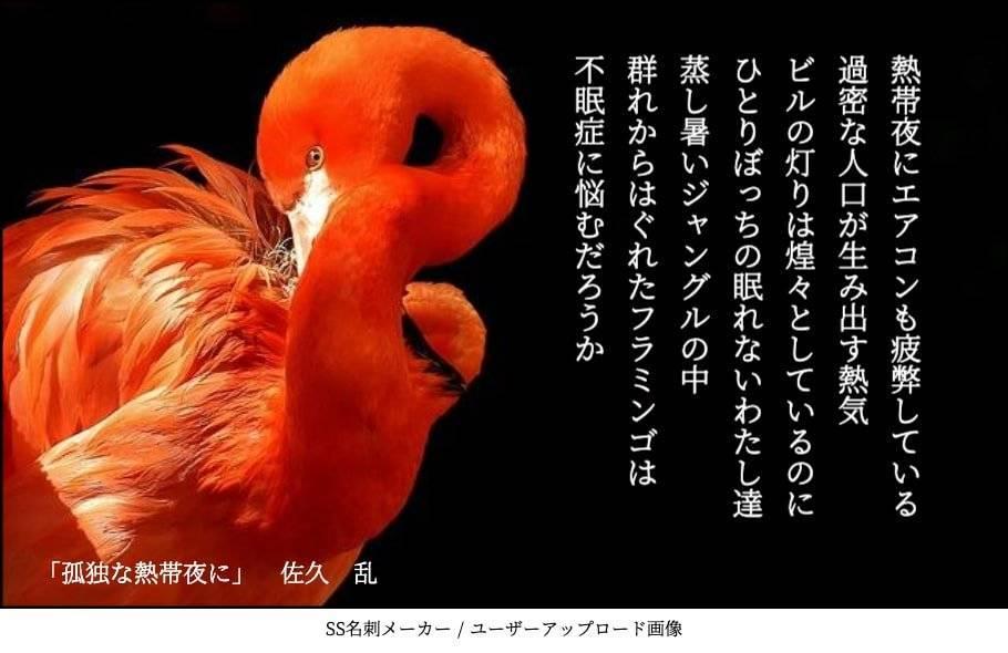 f:id:sakuran_blog:20200107082433j:plain