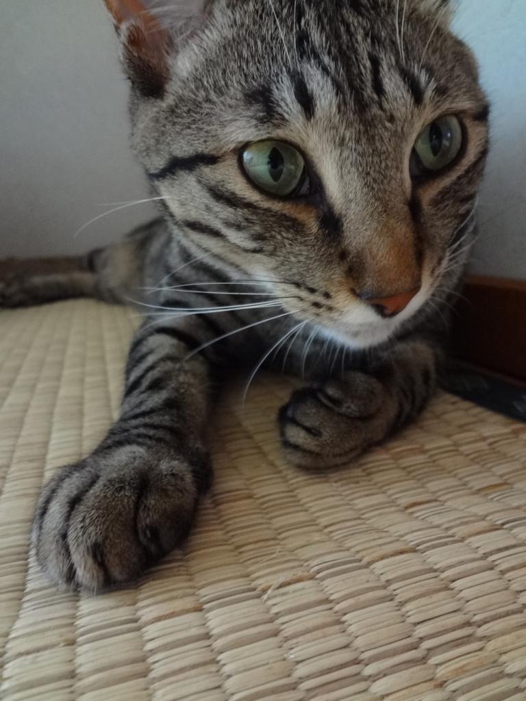 f:id:sakuranomikoto:20170830144102j:plain