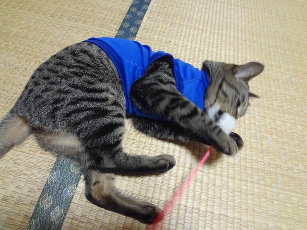 f:id:sakuranomikoto:20171030085455j:plain