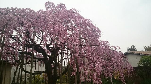 f:id:sakuranomiya-jthak-723773:20170409140812j:image