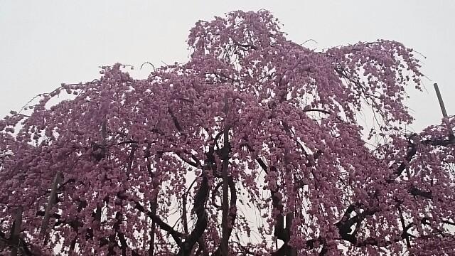 f:id:sakuranomiya-jthak-723773:20170409141551j:image