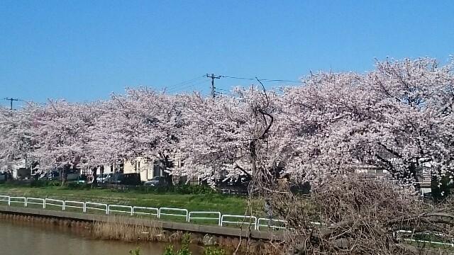 f:id:sakuranomiya-jthak-723773:20170413145442j:image