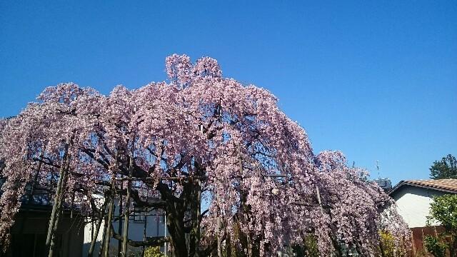 f:id:sakuranomiya-jthak-723773:20170413145726j:image