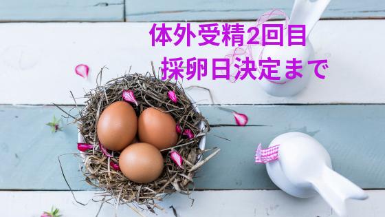 体外受精ショート法での誘発と採卵日決定まで