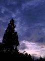 夕方の曇り空と針葉樹