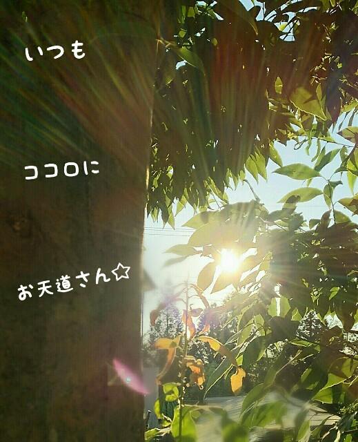 f:id:sakuratansokuclub1996:20180729145142j:image