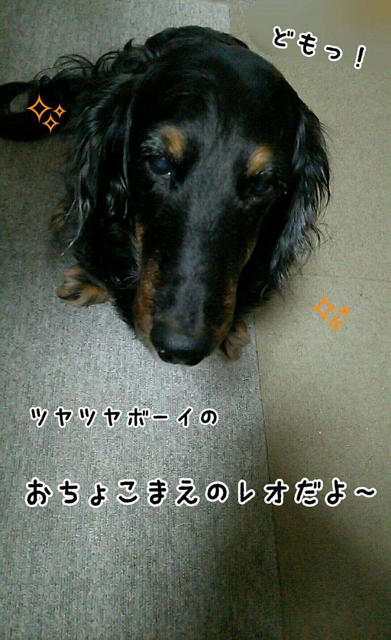 f:id:sakuratansokuclub1996:20180809090622j:image