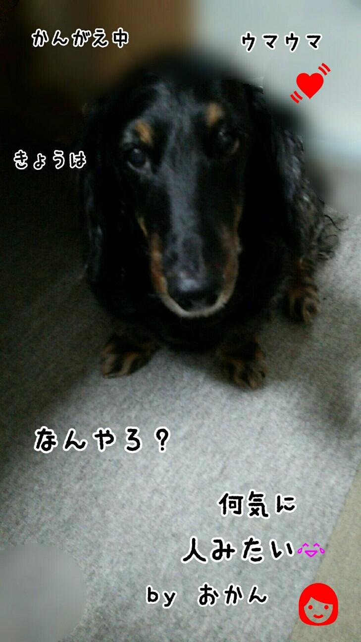 f:id:sakuratansokuclub1996:20180809092207j:image