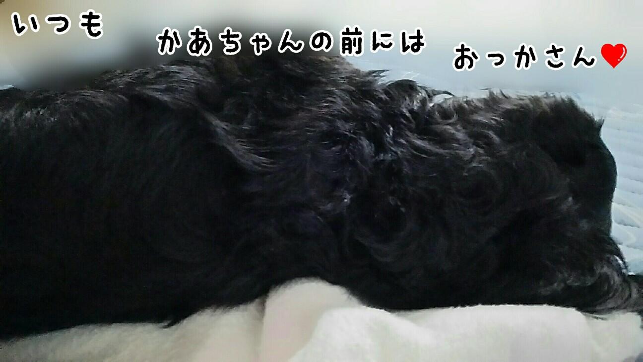 f:id:sakuratansokuclub1996:20180815064910j:image