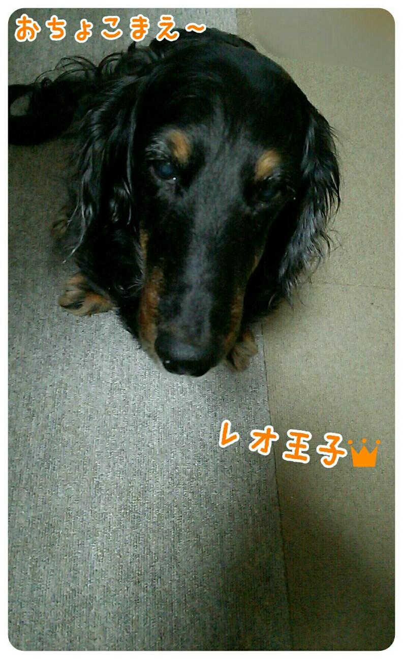 f:id:sakuratansokuclub1996:20180817144832j:image