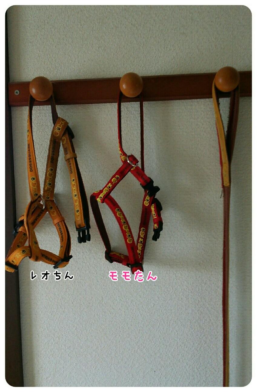 f:id:sakuratansokuclub1996:20180817153110j:image