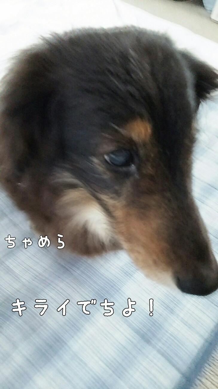 f:id:sakuratansokuclub1996:20180824213948j:image