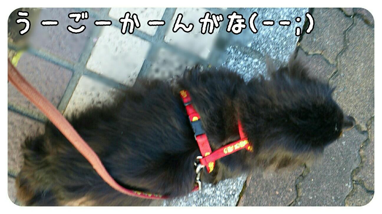 f:id:sakuratansokuclub1996:20180826093834j:image