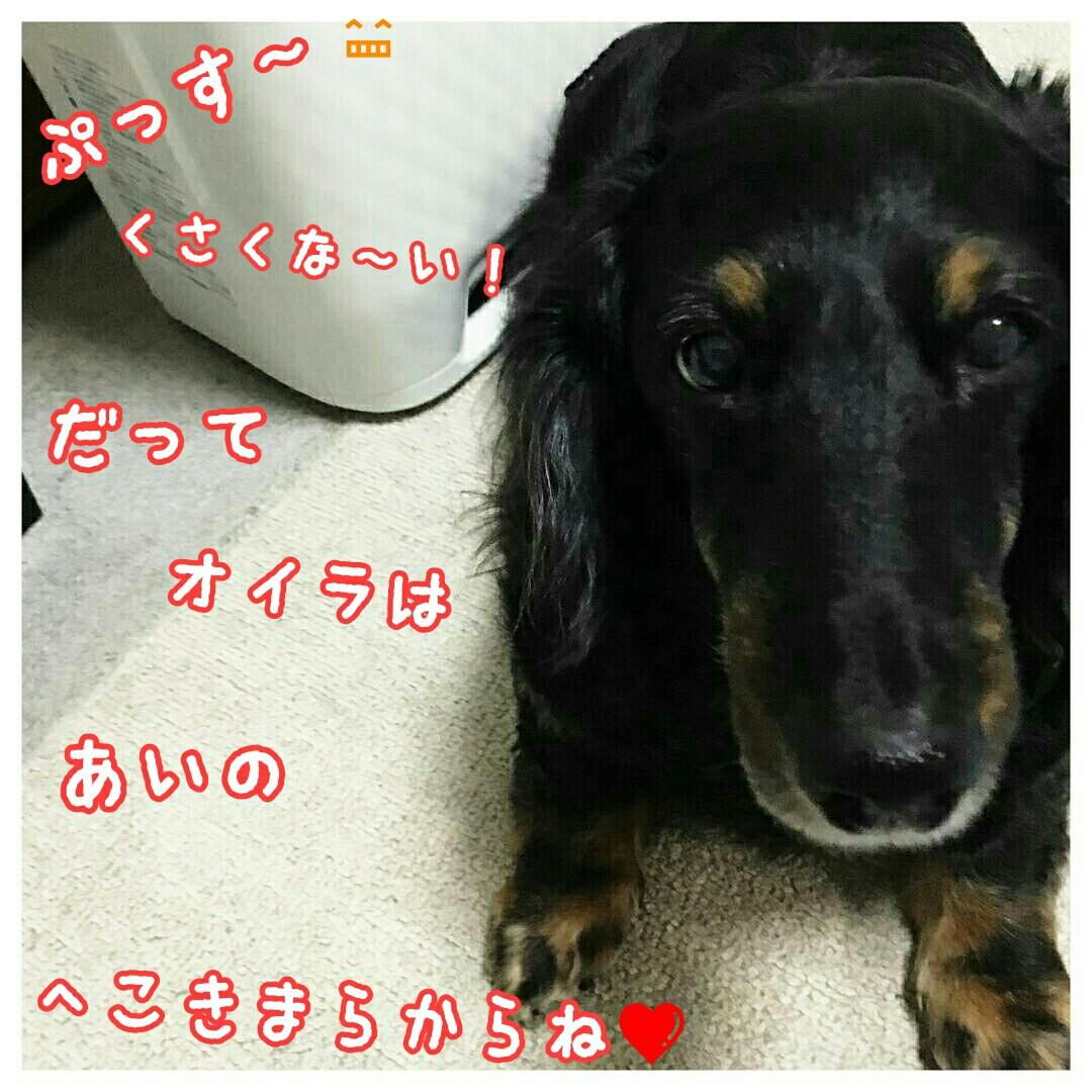 f:id:sakuratansokuclub1996:20180906052739j:image