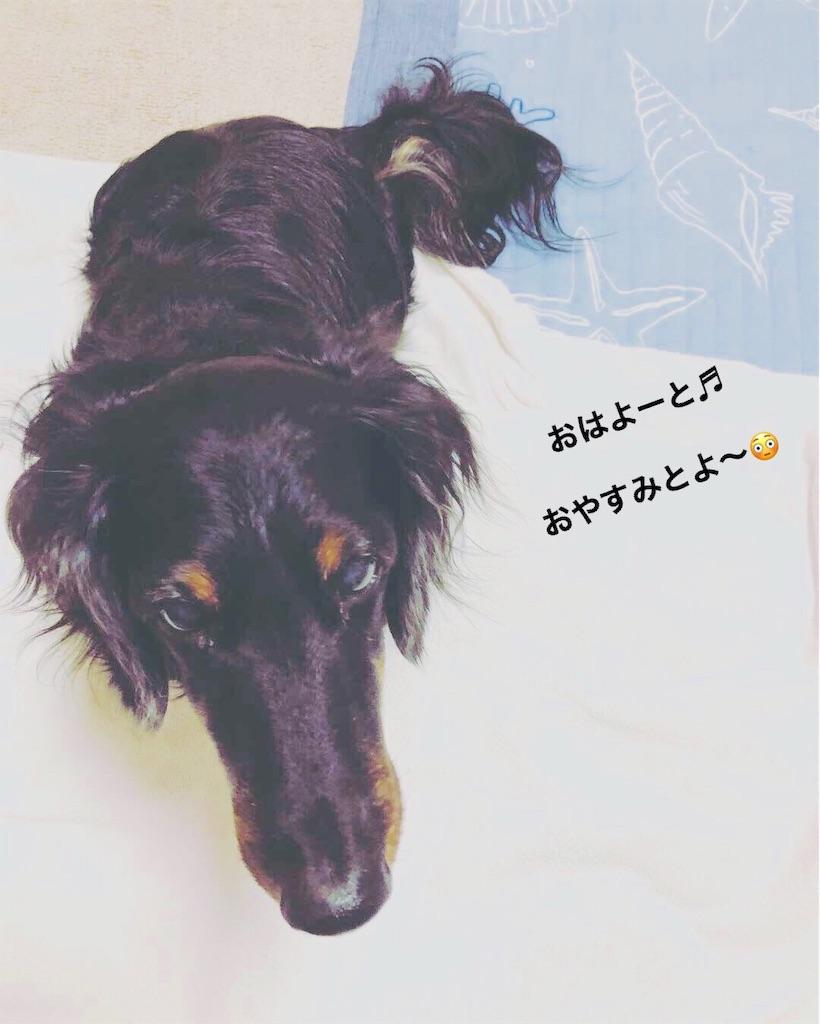 f:id:sakuratansokuclub1996:20180925052425j:image