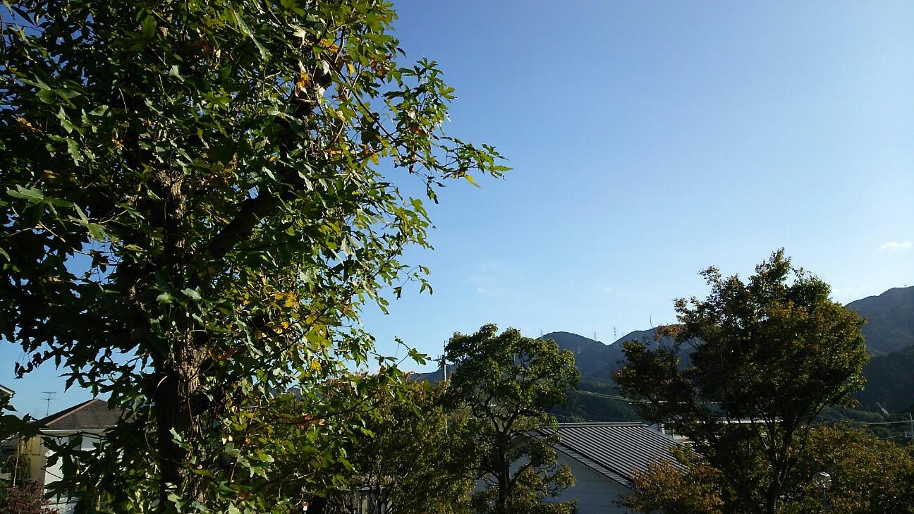 f:id:sakuratansokuclub1996:20181016100202j:image