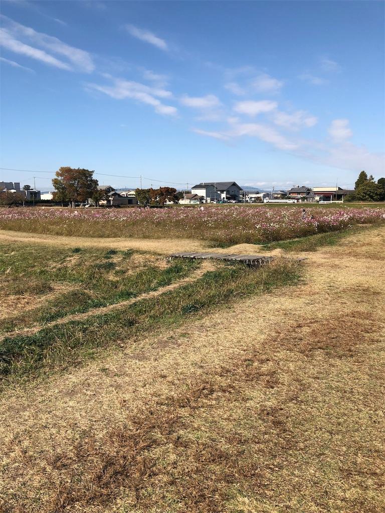 f:id:sakuratansokuclub1996:20181105213436j:image