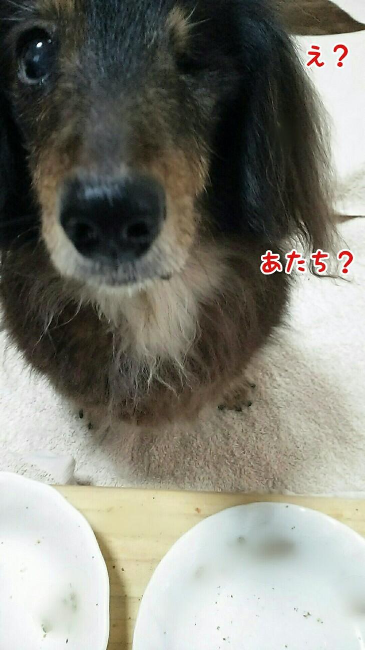 f:id:sakuratansokuclub1996:20190117082750j:image